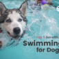 The Top 5 Benefits of Swimming for Dogs
