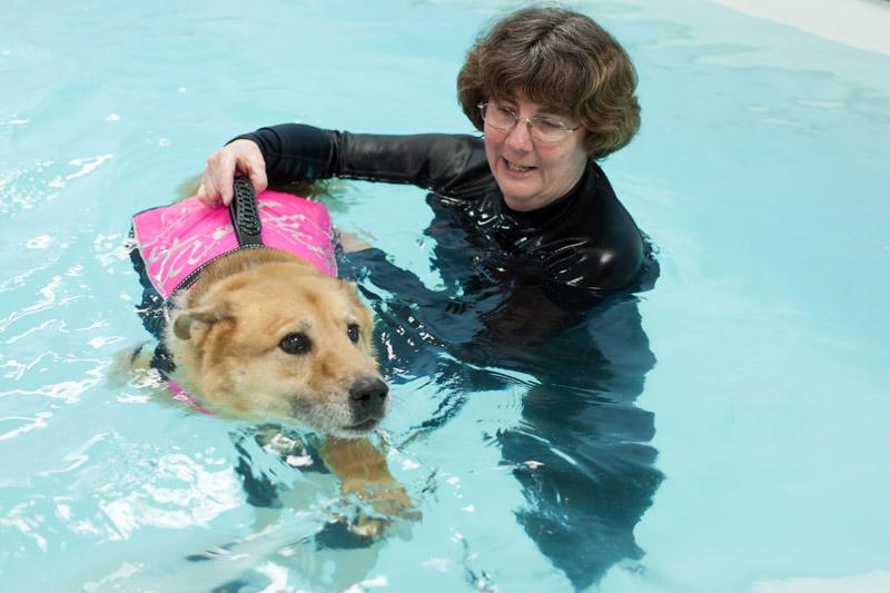 dog_swimming_1