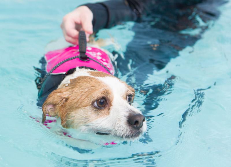 dog_swimming_10