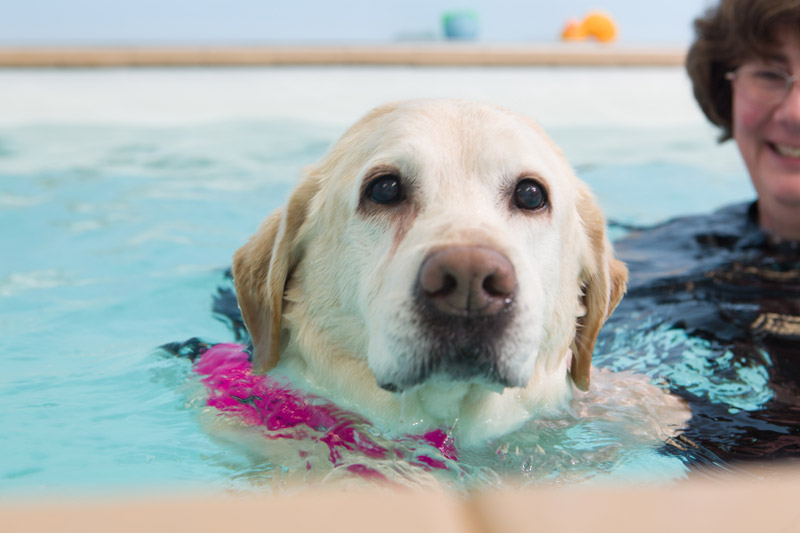 dog_swimming_11