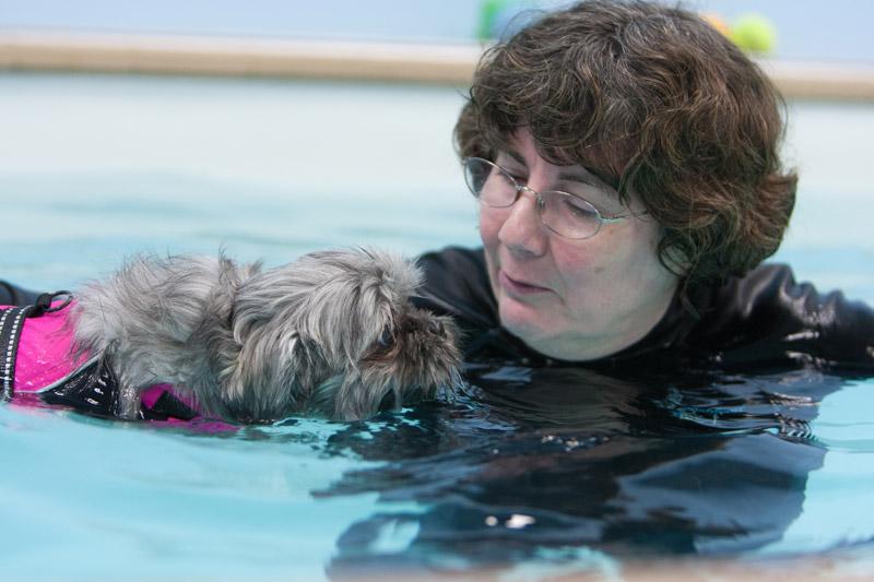 dog_swimming_4