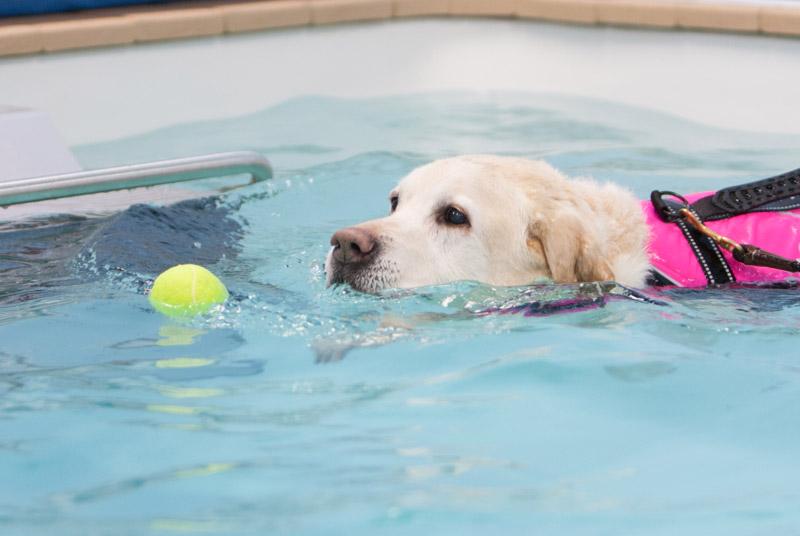 dog_swimming_7